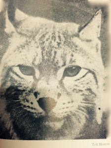 Ella's cat Mascot. Courtesy  of National Library of Ireland
